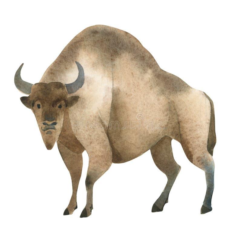 Illustrazione dell'acquerello su fondo bianco Metta di bizon marrone enorme Schizzo semplice degli animali selvaggi della foresta illustrazione vettoriale