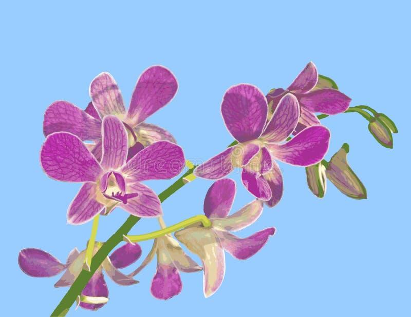 Illustrazione dell'orchidea: Equestris di Phalaenopsis fotografia stock libera da diritti