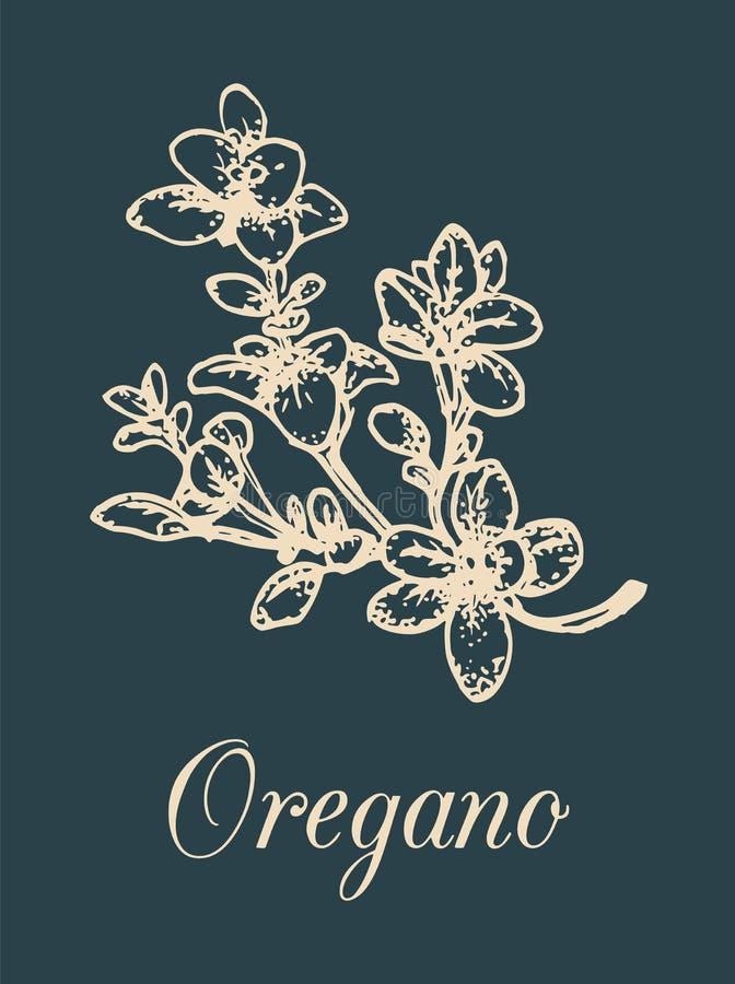 Illustrazione dell'origano di vettore su fondo nero La mano ha schizzato la pianta aromatica Disegno culinario della spezia Erba  royalty illustrazione gratis