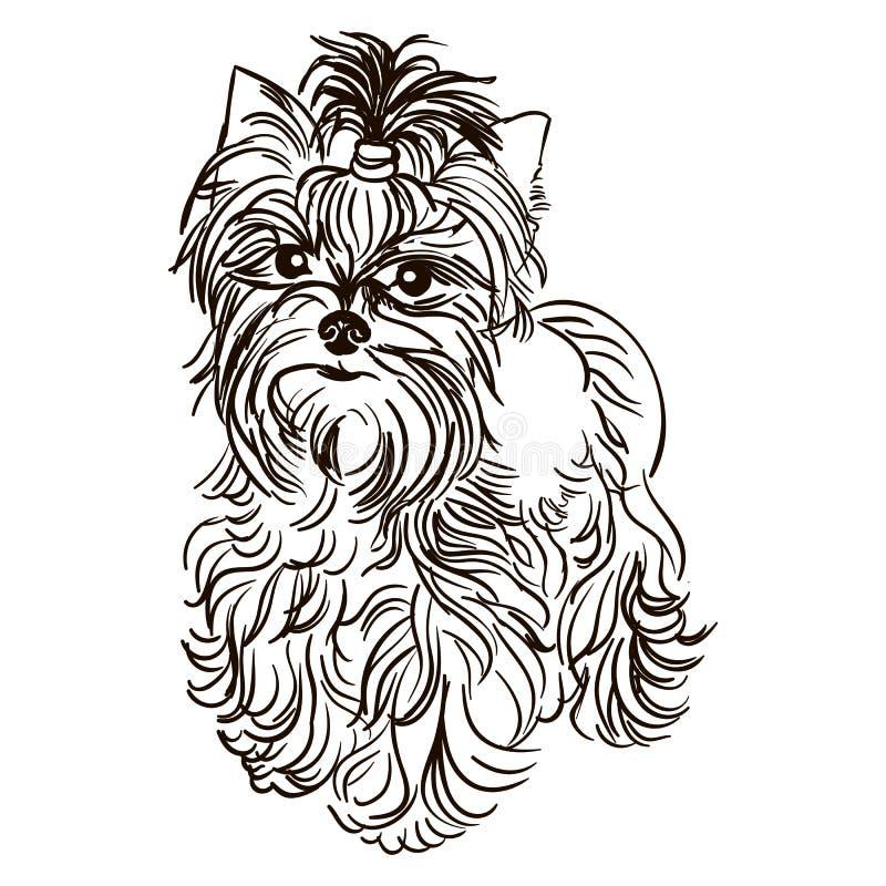 Illustrazione dell'Yorkshire terrier della razza del cane illustrazione di stock