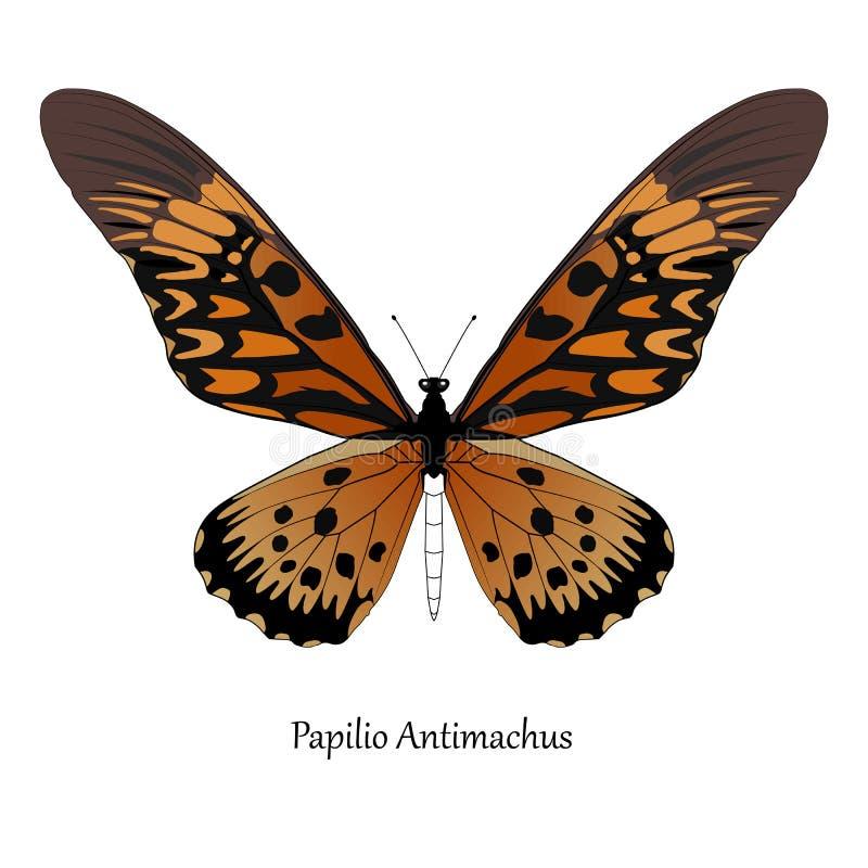 Illustrazione della coda di rondine africana gigante - antimachus di Papilio royalty illustrazione gratis