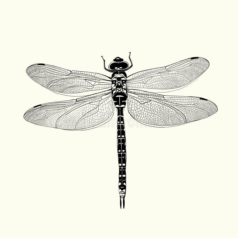 Illustrazione della libellula fotografia stock