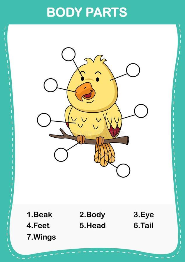 Illustrazione della parte di vocabolario dell'uccello del corpo royalty illustrazione gratis
