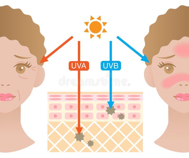 Illustrazione della pelle di Infographic La differenza fra UVA e UVB rays la penetrazione illustrazione vettoriale