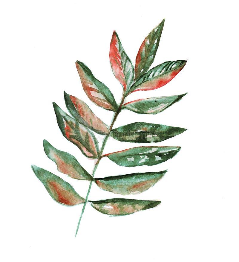 Illustrazione della pianta verde del cespuglio con le for Pianta con foglie rosse