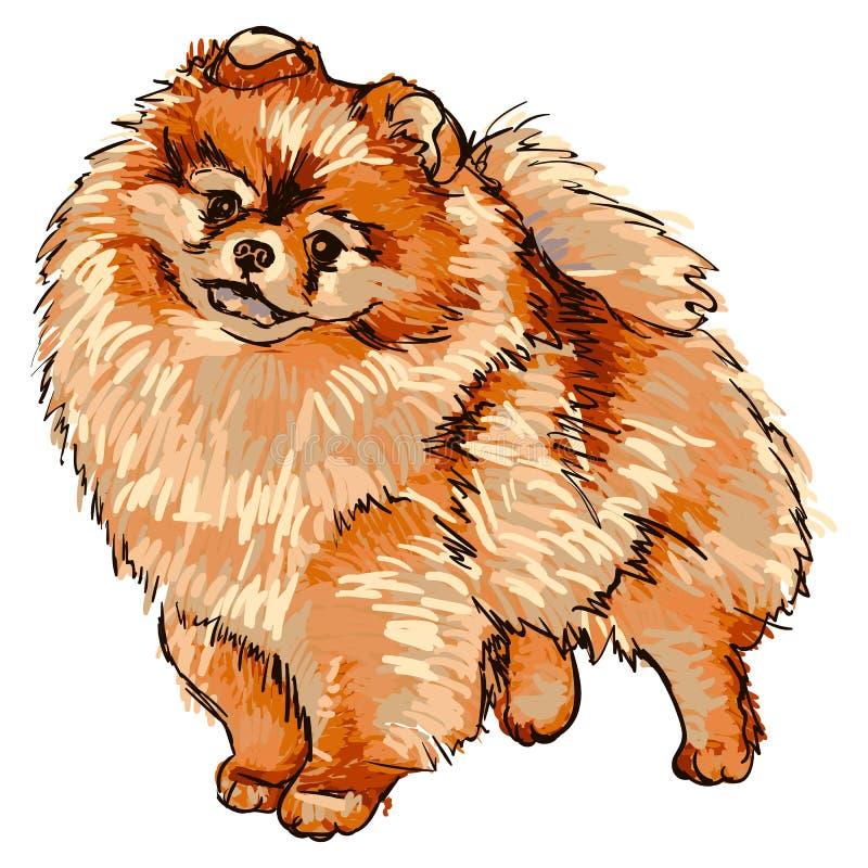 Illustrazione della razza Pomeranian del cane royalty illustrazione gratis