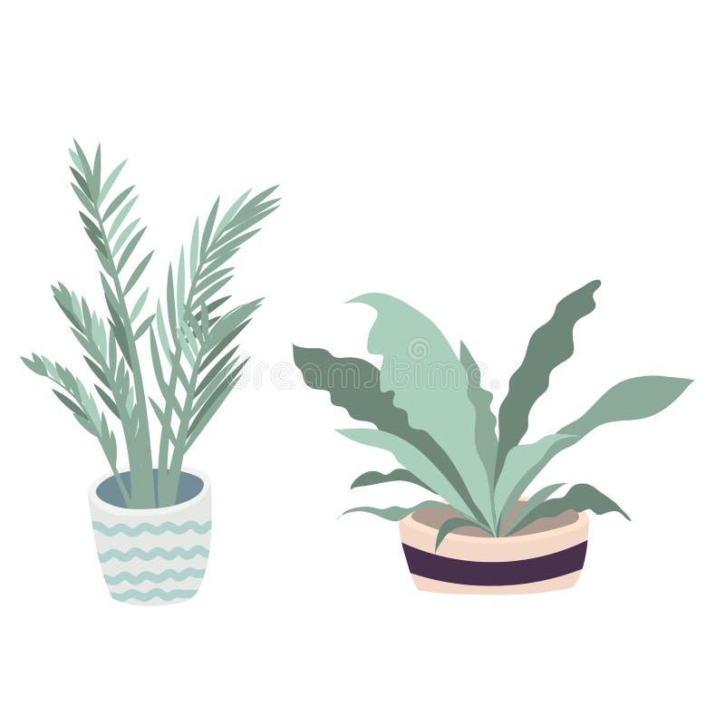 Illustrazione delle piante da appartamento di vettore Metta di due fiori di vettore Fiori conservati in vaso nei colori pastelli  illustrazione di stock