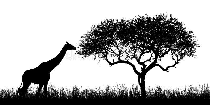 Illustrazione delle siluette della giraffa e dell'albero dell'acacia con erba nel safari africano nel Kenia - isolato su fondo bi illustrazione di stock