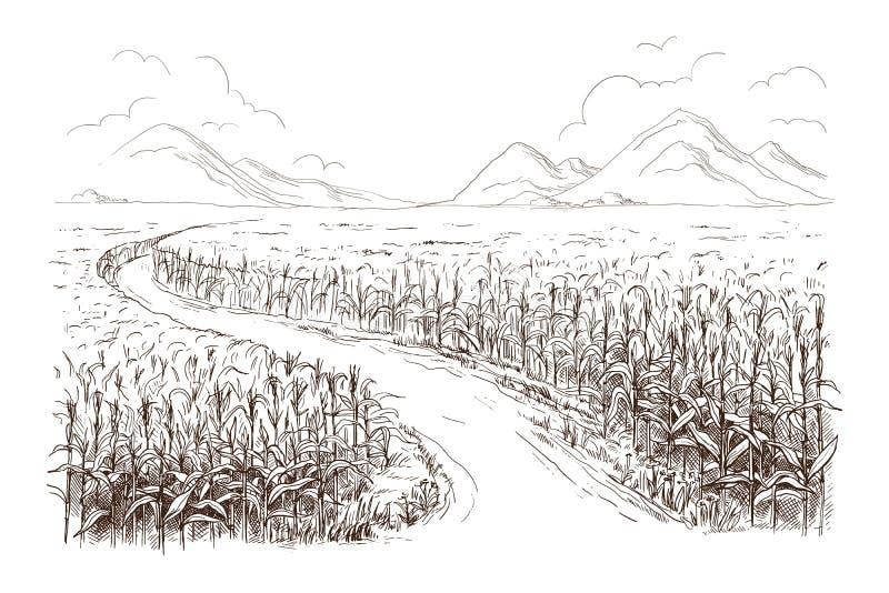 Illustrazione dello schizzo del gambo del grano del campo di mais illustrazione di stock