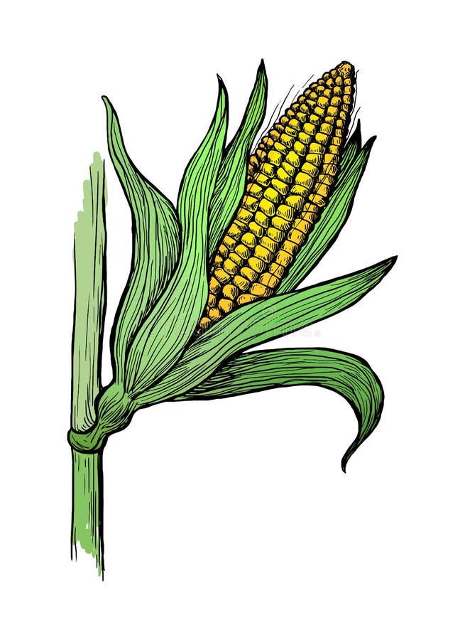 Illustrazione dello schizzo del gambo del grano del cereale royalty illustrazione gratis