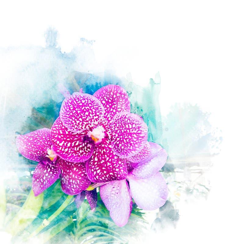 Illustrazione di bella orchidea del fiore illustrazione di stock