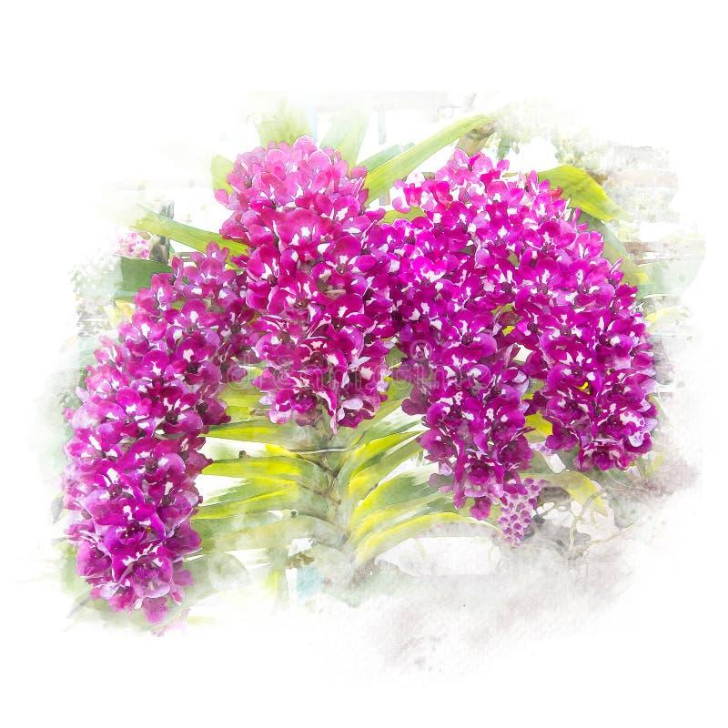 Illustrazione di bella orchidea del fiore illustrazione vettoriale