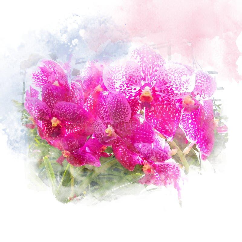 Illustrazione di bella orchidea del fiore royalty illustrazione gratis