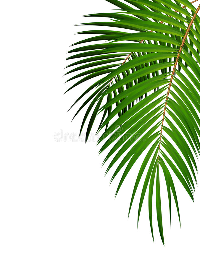Illustrazione di foglia di palma del fondo di vettore illustrazione vettoriale