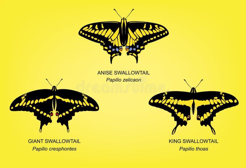 Illustrazione di re Swallowtail Set Vector della farfalla illustrazione di stock