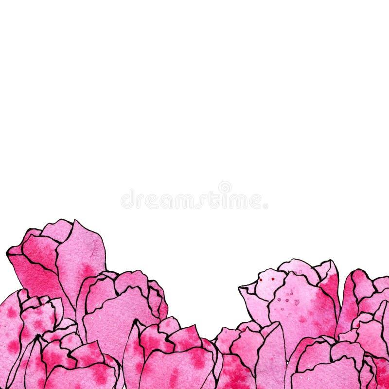 Illustrazione di schizzo dell'acquerello dei tulipani rosa su un fondo bianco sistemato dal lato inferiore royalty illustrazione gratis