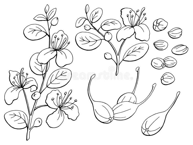 Illustrazione di schizzo isolata bianco nero grafico dei capperi illustrazione di stock
