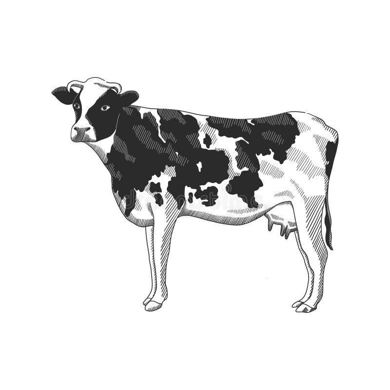 Illustrazione di stile grafico tirato disponibile della mucca, illustrazione di disegno d'incisione in bianco e nero di vettore A royalty illustrazione gratis
