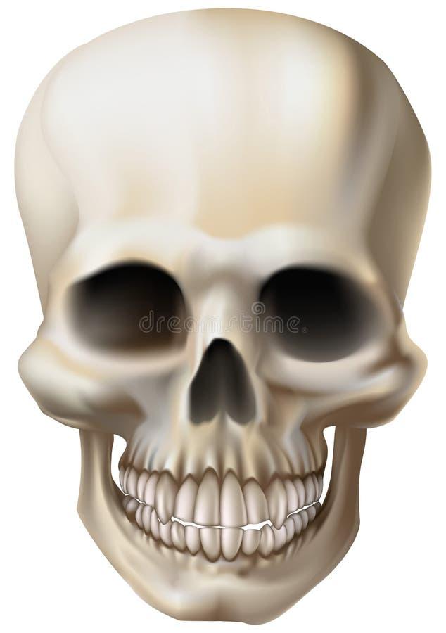 Illustrazione di un cranio umano illustrazione vettoriale