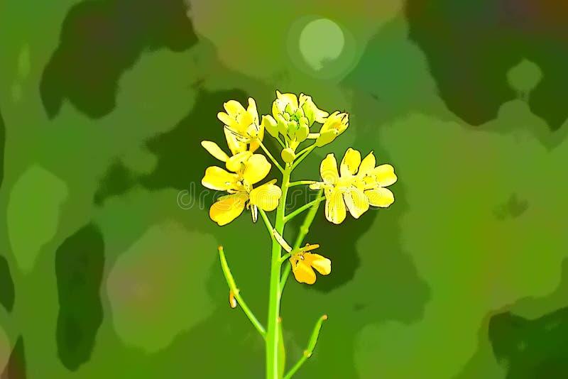 Illustrazione di una pianta isolata della senape con fondo verde royalty illustrazione gratis
