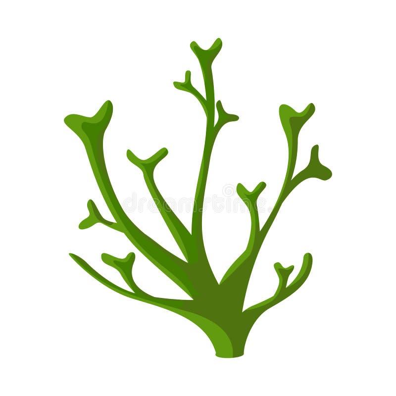 Illustrazione di vettore di alga e del logo marino Raccolta di alga ed icona verde di vettore per le azione royalty illustrazione gratis