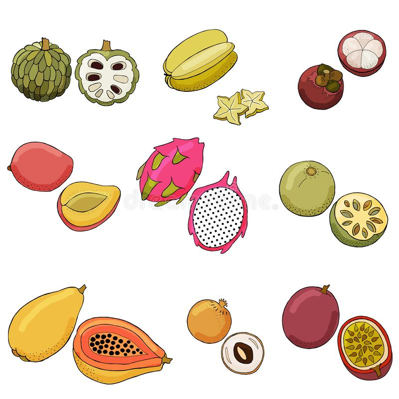 Illustrazione di vettore dei frutti esotici illustrazione vettoriale