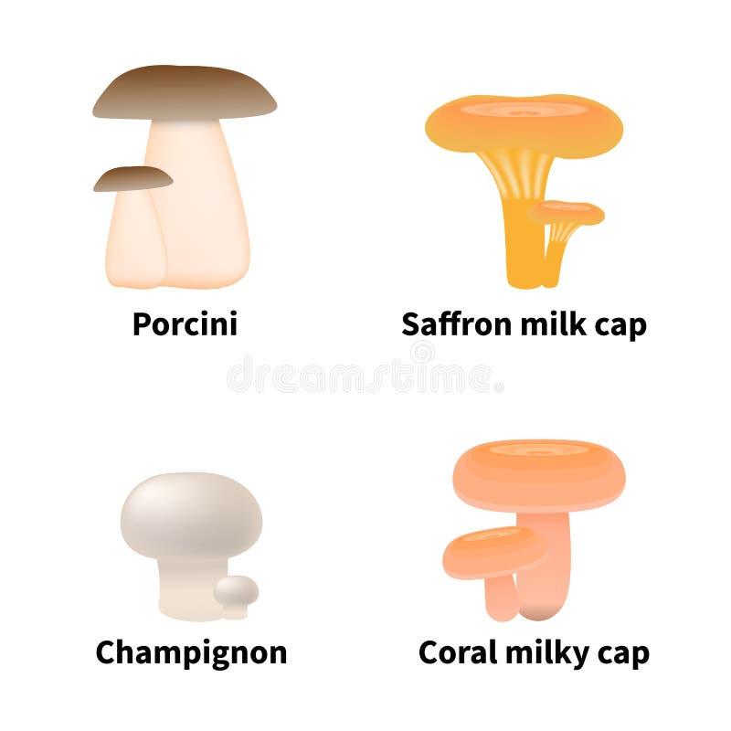 Illustrazione di vettore dei funghi commestibili illustrazione vettoriale