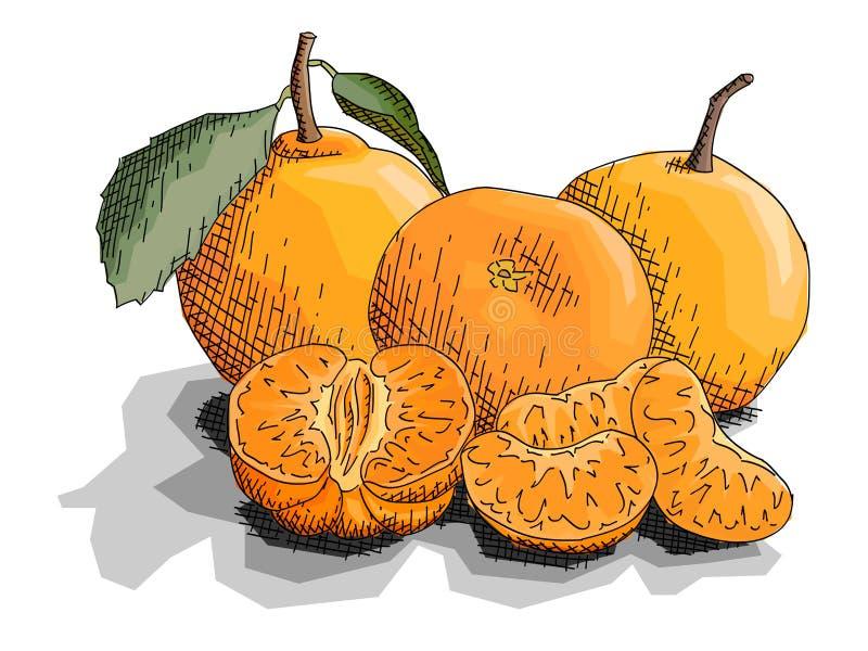 Illustrazione di vettore dei mandarini della frutta del disegno royalty illustrazione gratis