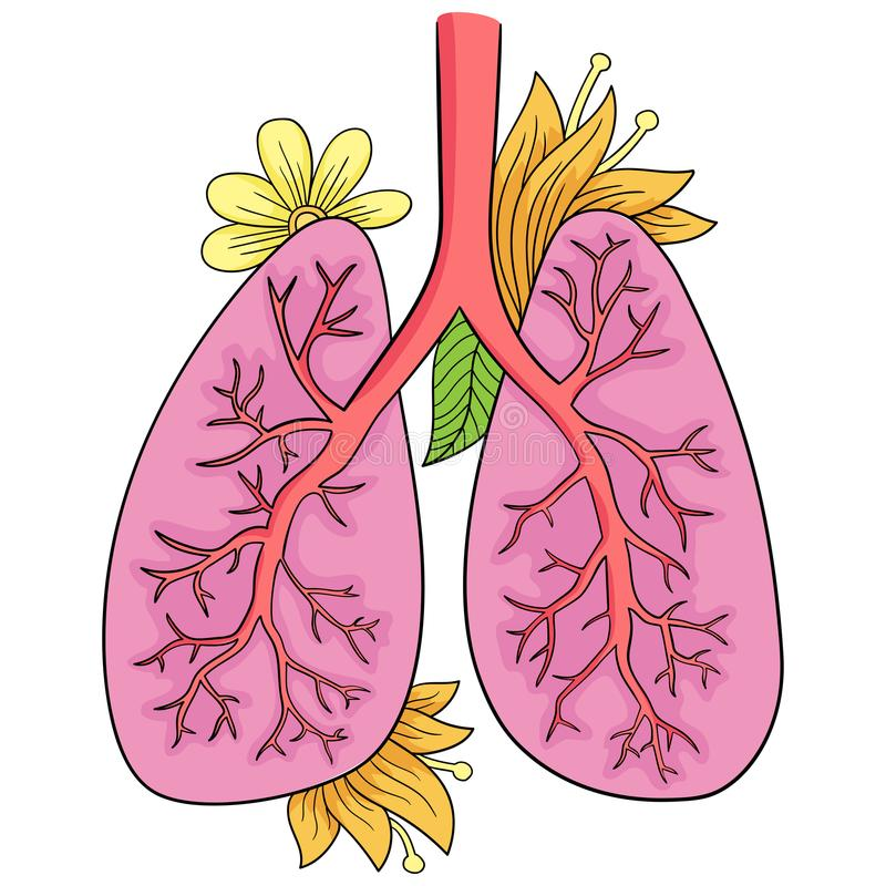 Illustrazione di vettore dei polmoni Disegno di scarabocchio dell'organo umano royalty illustrazione gratis