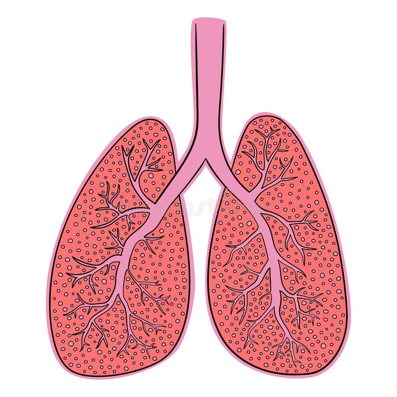 Illustrazione di vettore dei polmoni Disegno di scarabocchio dell'organo umano illustrazione vettoriale