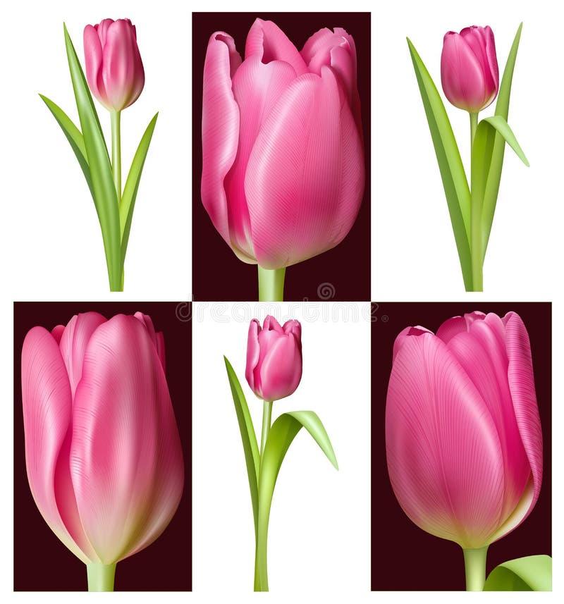 Tulipani rosa illustrazione di stock
