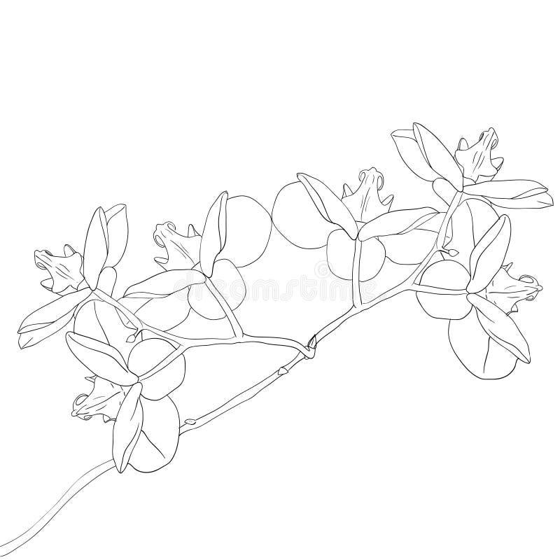 Illustrazione di vettore del fiore dell'orchidea illustrazione di stock