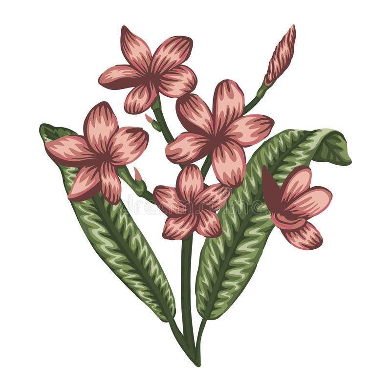 Illustrazione di vettore del fiore tropicale colorato isolato su fondo bianco royalty illustrazione gratis