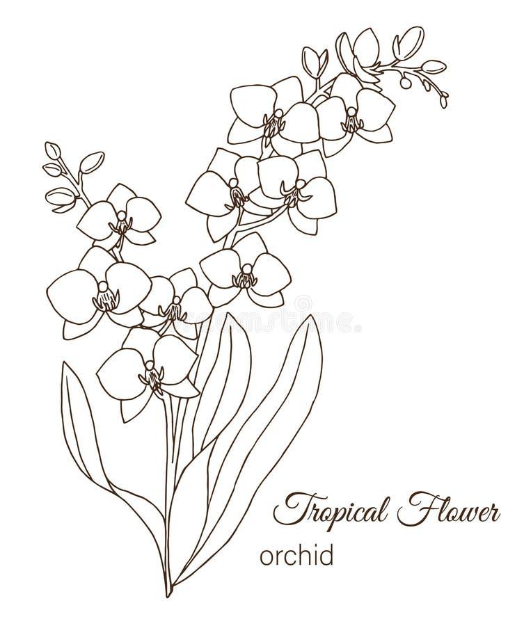 Illustrazione di vettore del fiore tropicale isolata su fondo bianco illustrazione di stock