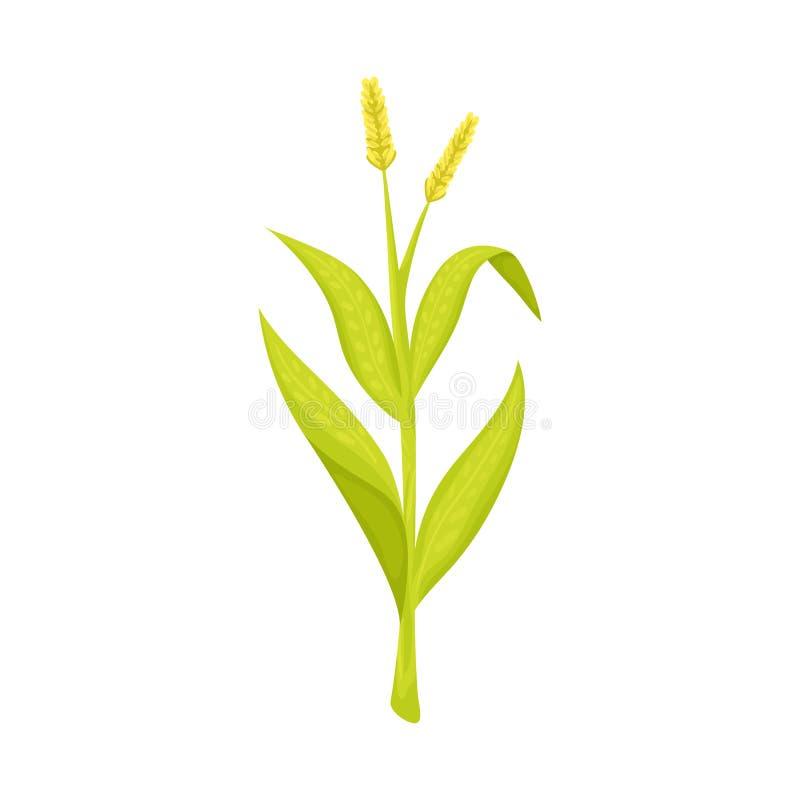 Illustrazione di vettore del logo del cereale e del dolce Metta del simbolo di riserva dolce e botanico per il web royalty illustrazione gratis
