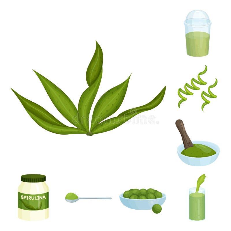 Illustrazione di vettore del logo dell'alga e di spirulina Raccolta dell'illustrazione di vettore delle azione del vegano e di sp royalty illustrazione gratis