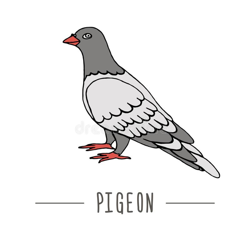Illustrazione di vettore del piccione Icona disegnata a mano di comunicazione Segni della posta del piccione isolati su fondo bia illustrazione vettoriale