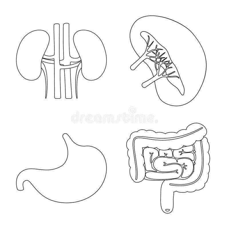Illustrazione di vettore dell'icona dell'organo e di anatomia Metta dell'anatomia e del simbolo di riserva medico per il web illustrazione di stock