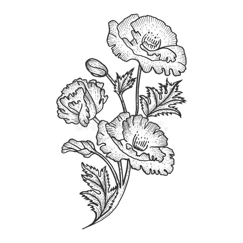 Illustrazione di vettore dell'incisione di schizzo del fiore del papavero royalty illustrazione gratis