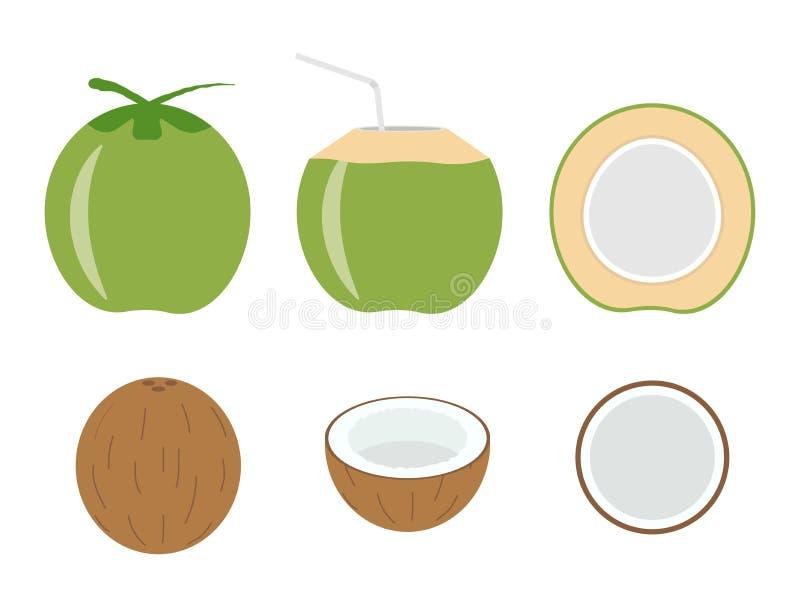 Illustrazione di vettore della noce di cocco fresca rassodata illustrazione di stock