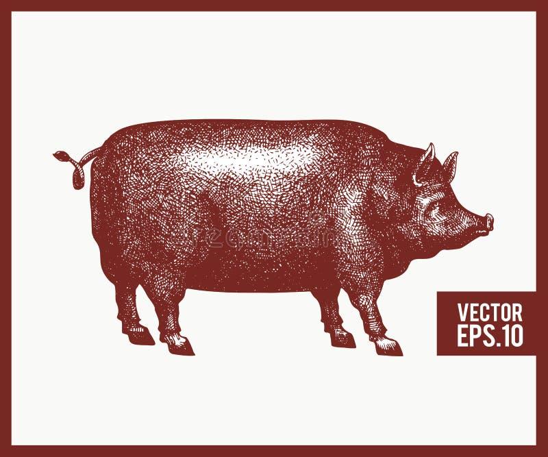 Illustrazione di vettore della siluetta nera del maiale Retro stile dell'incisione Disegno dell'animale da allevamento di schizzo illustrazione di stock