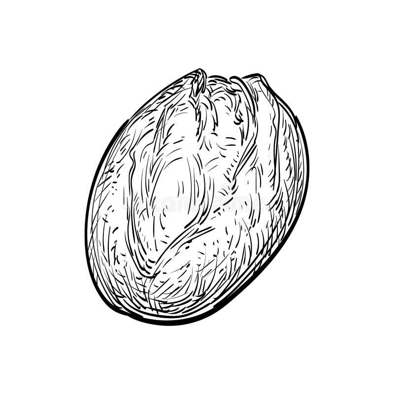 Illustrazione di vettore di pane rustico illustrazione di stock