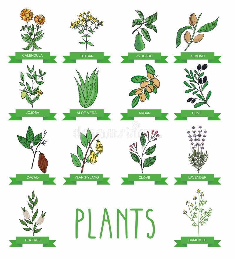 Illustrazione di vettore di una pianta illustrazione vettoriale