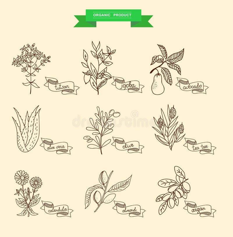Illustrazione di vettore di una pianta illustrazione di stock