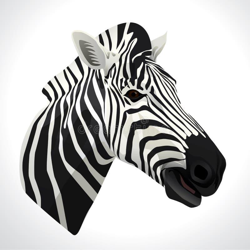 Illustrazione di vettore di una zebra fotografia stock