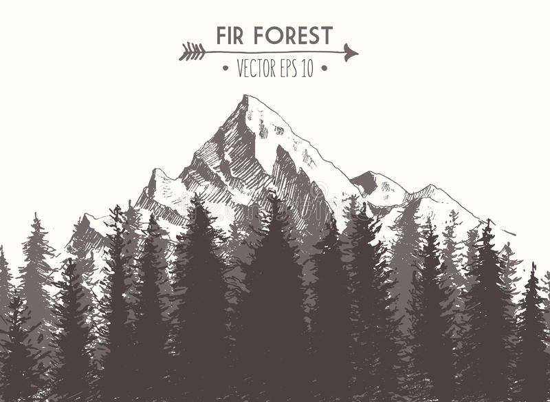 Illustrazione di vettore disegnata montagna della foresta dell'abete royalty illustrazione gratis
