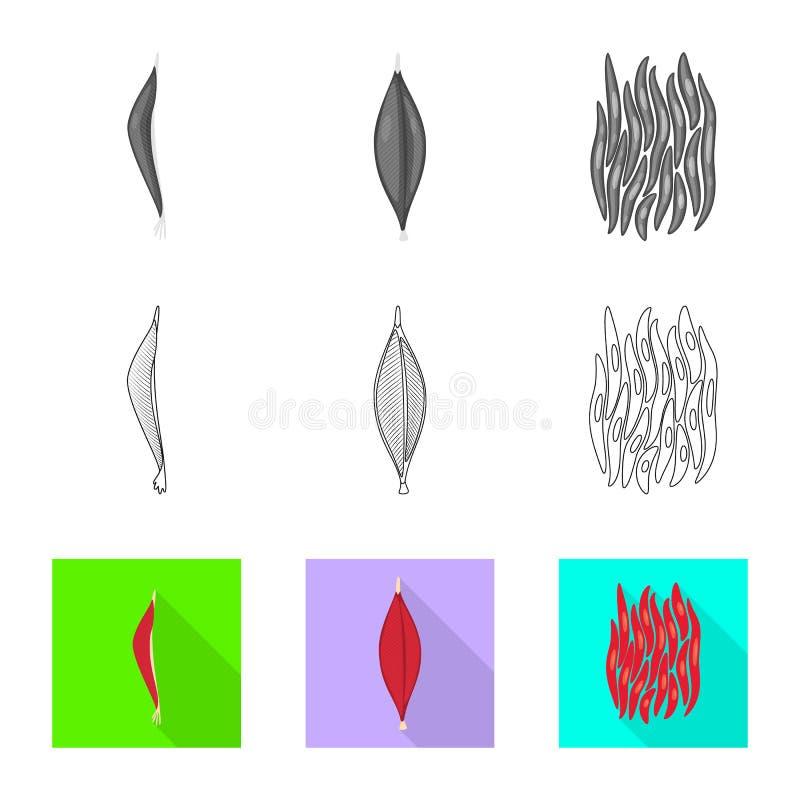 Illustrazione di vettore di fibra e del logo muscolare Metta dell'icona di vettore del corpo e della fibra per le azione illustrazione vettoriale
