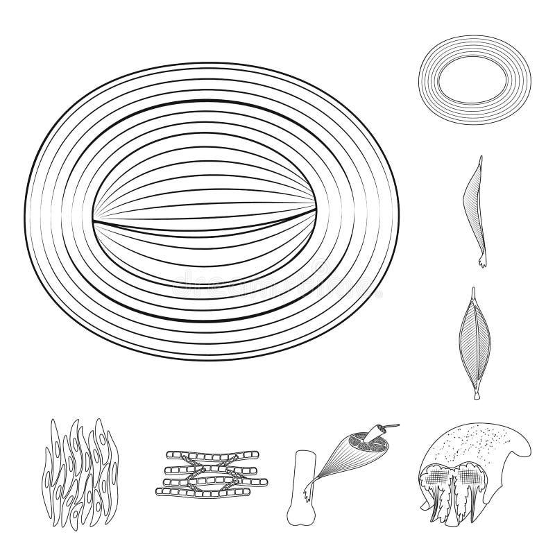 Illustrazione di vettore di fibra e del logo muscolare Metta dell'icona di vettore del corpo e della fibra per le azione royalty illustrazione gratis