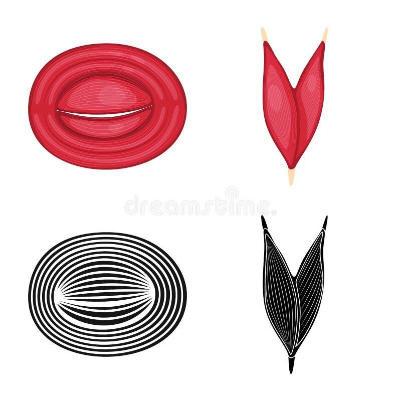 Illustrazione di vettore di fibra e del logo muscolare Raccolta dell'icona di vettore del corpo e della fibra per le azione royalty illustrazione gratis