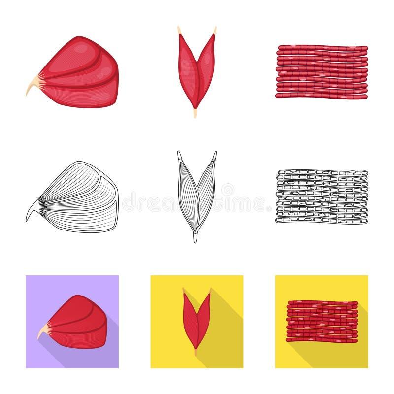 Illustrazione di vettore di fibra e del segno muscolare Metta dell'illustrazione di vettore delle azione del corpo e della fibra royalty illustrazione gratis